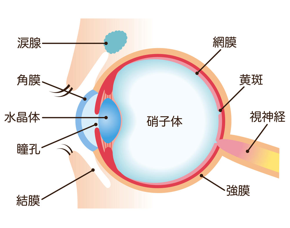 高齢者が避けて通れない目の病気「白内障」とは?
